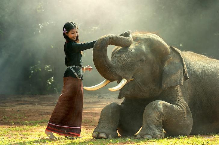 象の頭をなでる民族衣装を着たタイ人女性
