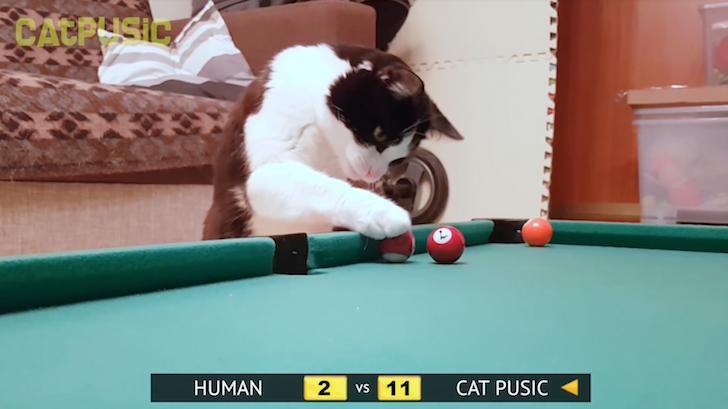 ビリヤードの上手な猫