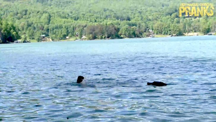 偽物のワニが近づいて泳いで逃げる男性