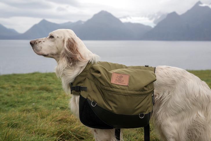 湖のほとりに立つ背中にかばんを抱える使役犬