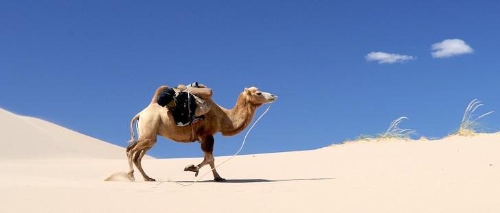広大な砂漠を荷物を背負って歩くラクダ