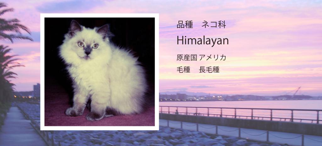 f:id:kohyusya:20171201191044j:plain