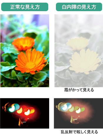 f:id:koichi-hokkaido:20161018233325j:plain