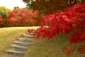 京都新聞写真コンテスト 『この階段で私、こけました。』