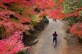 京都新聞写真コンテスト 『最高の通学路』