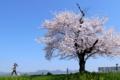 京都新聞写真コンテスト 『いつもの風景 春編』