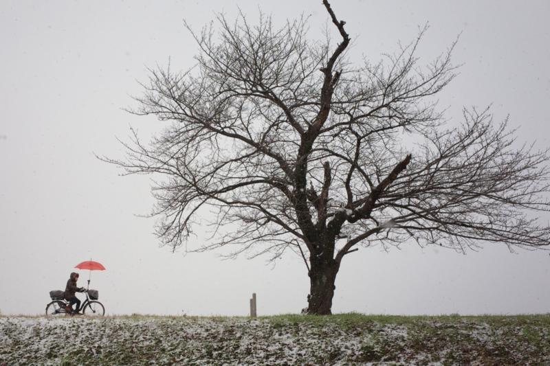 京都新聞写真コンテスト 『いつもの風景  冬編』