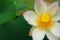 京都新聞写真コンテスト『もう少し、咲いています。』