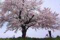 京都新聞写真コンテスト 『きれいに撮ってね』