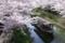 京都新聞写真コンテスト 『今日も1日頑張ります!』