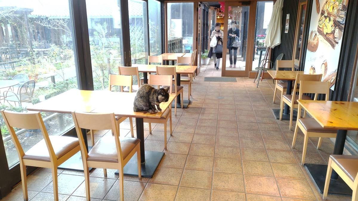館内をうろつく猫ちゃん