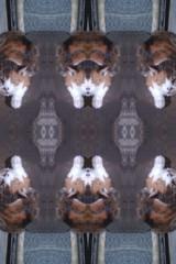 f:id:kojima41:20090218000645j:image