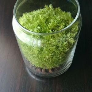 生長した山苔