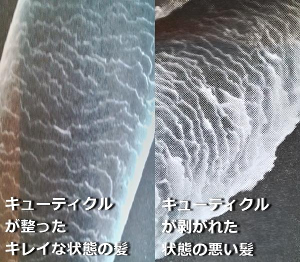 f:id:kokebozu:20210830095740j:plain