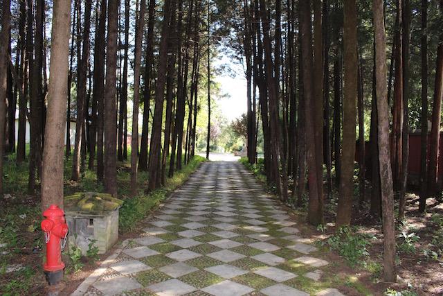 f:id:kokeshiyamada:20171118110521j:plain