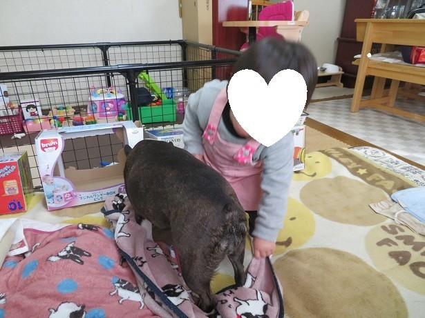 f:id:kokichikawabe:20180219085523j:image