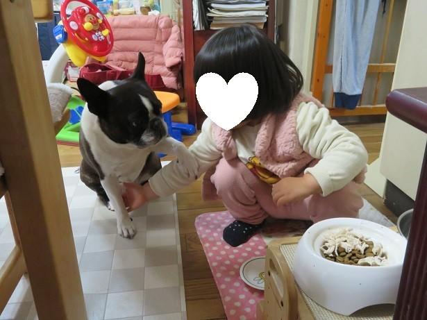 f:id:kokichikawabe:20190319154044j:plain
