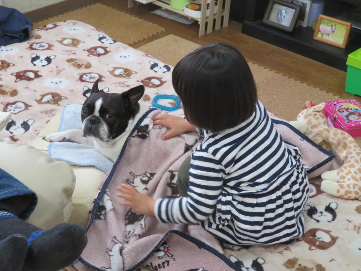 f:id:kokichikawabe:20190320120030j:plain