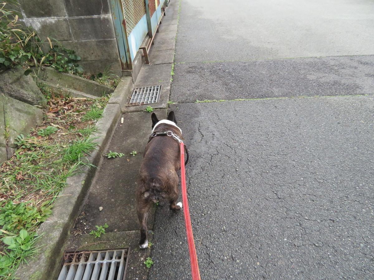 f:id:kokichikawabe:20190321122626j:plain