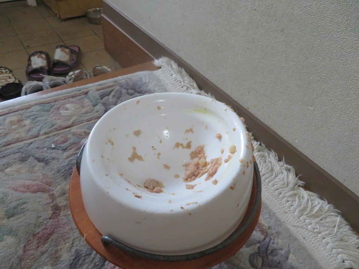 f:id:kokichikawabe:20210509175516j:plain