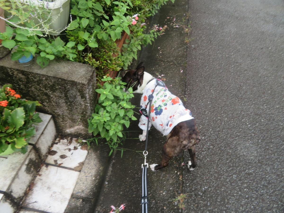 f:id:kokichikawabe:20210917084914j:plain
