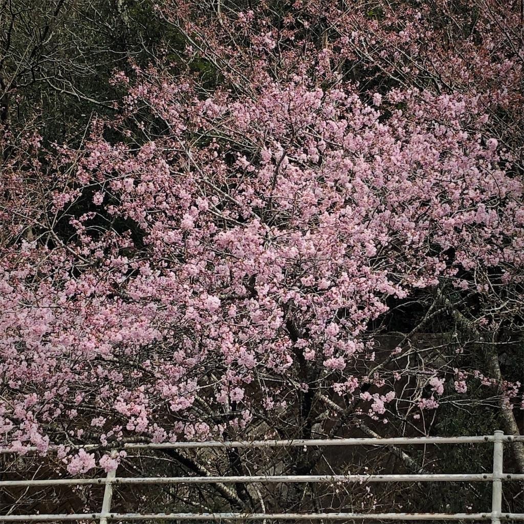 f:id:kokohahurusatokazemakase:20190410094624j:image