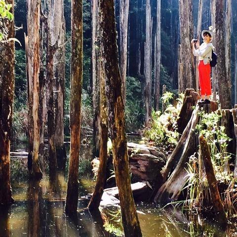 忘憂森林2