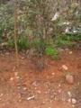 碧螺春の茶産地の土壌様相の一つ