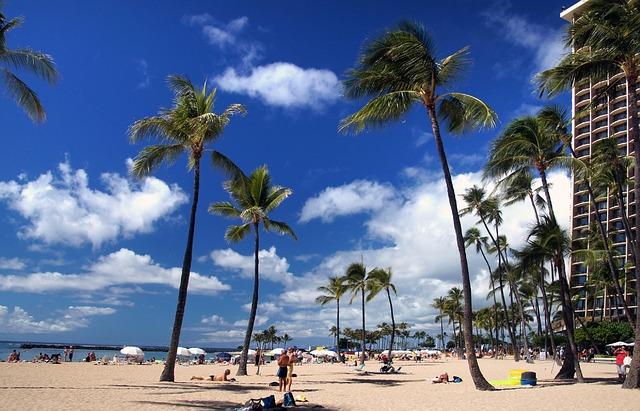 青空を背景にビーチに並ぶヤシの木