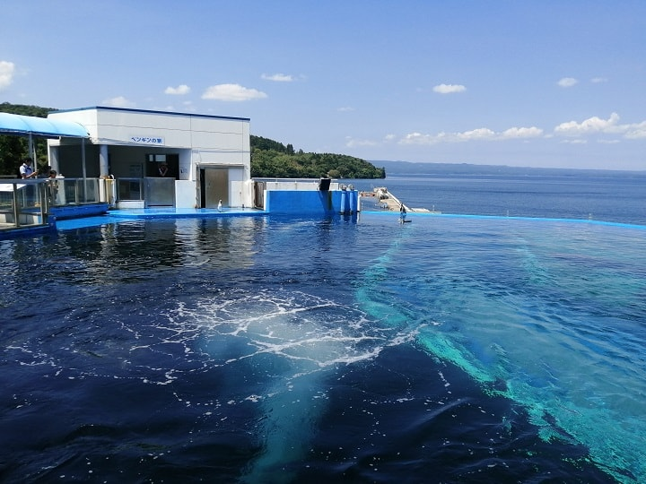のとじま水族館 イルカたちの楽園