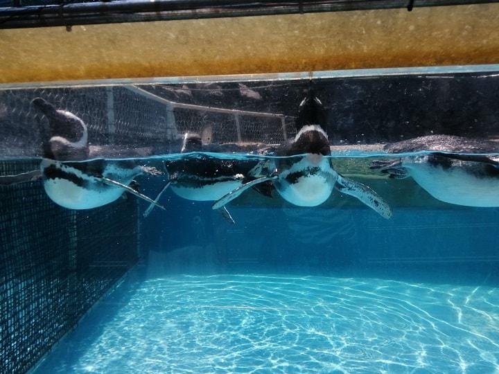のとじま水族館 ペンギン