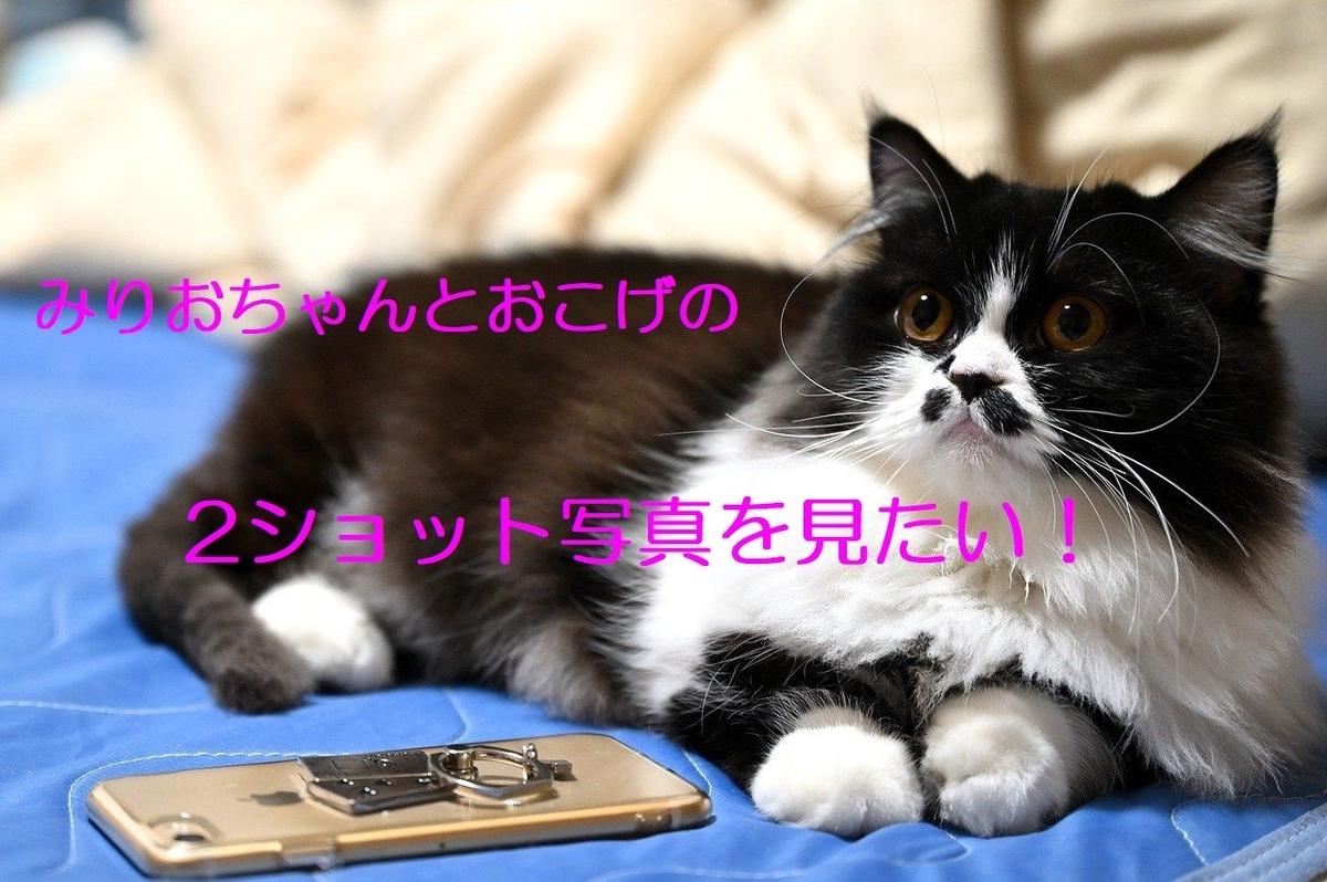 f:id:kokoro-aozora:20200414220938j:plain