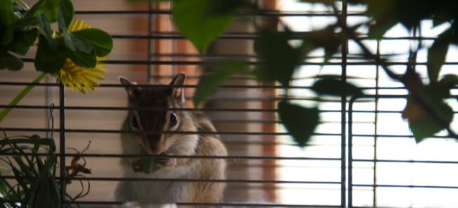 2012/6/2/ウリ青草を食む