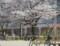 2012.4.10/名古屋市新福寺公園