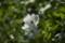 2014.6.30/石狩の外水栓に咲き出した。