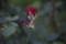 帯広/バラがチェルノブイリみたいに2段咲き 土はRADEXで0.12の不思議