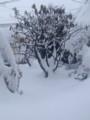 2016.2.29/朝起きると一番の積雪