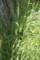 2016.7.12/小桜インコは緑穂も好き