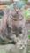 2016.7.14/アリジが子猫を連れてきた。