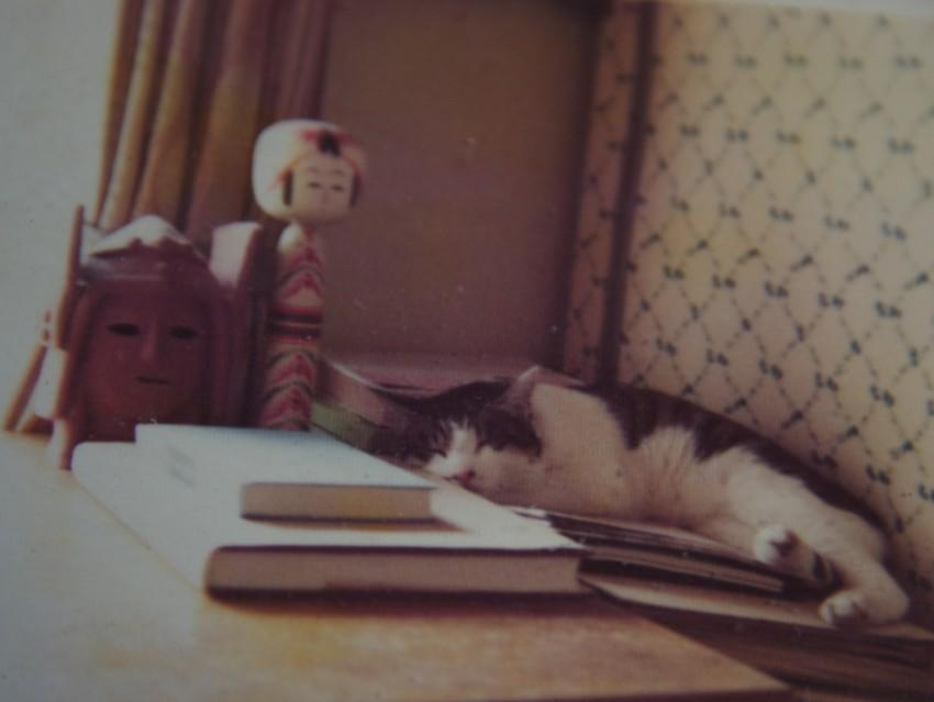 昔飼っていた猫
