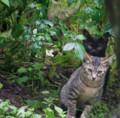 2016.8.31/台風10号通過後子猫たちが走り回る。
