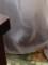2016.9.4/子猫のコアリがお部屋の中に入ってきた。隠れてるの。