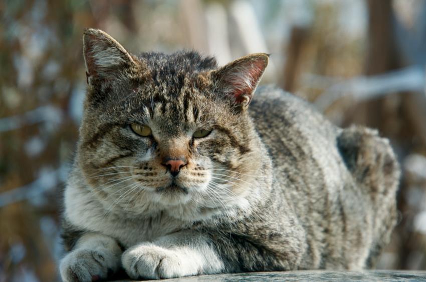 2017.3.1/アリジの兄弟猫半年ぶりで現わる。ぐっと寄っても動じない。