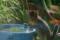 2016.9.10/コアリ雨水が好き