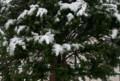 2017.4月中旬に雪なんて。