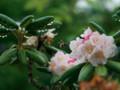 2018.7.4/花粉籠