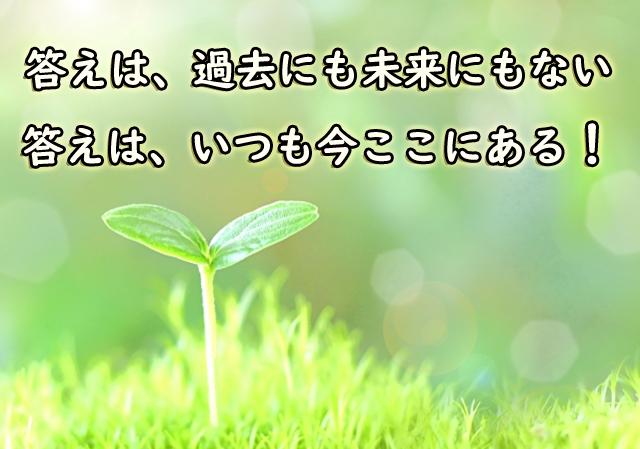 答えは、過去にも未来にもない。 答えは、いつも今ここにある!