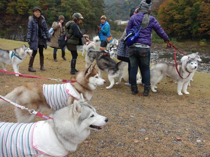 f:id:kokunai3333:20121126154620j:image