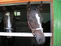 [出資馬以外]マイネシャローナと08産当歳牝馬(父スペシャルウィーク)