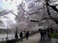 [その他]万代池(大阪市住吉区)の桜 2010.3.31